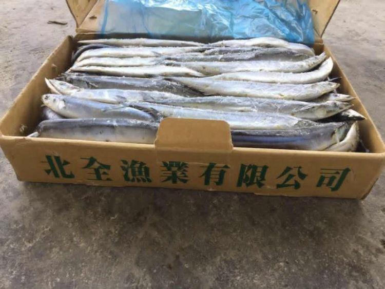 廣西供55噸凍魚