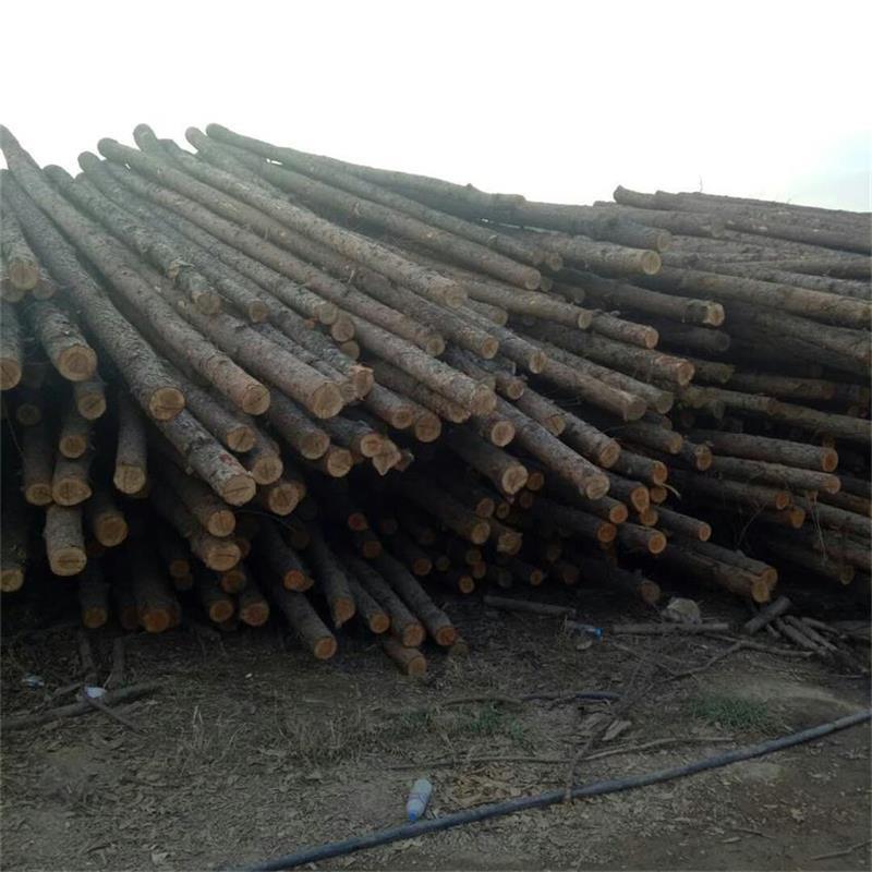 油木杆生产厂家 防腐油木杆 油炸杆--河间永兴
