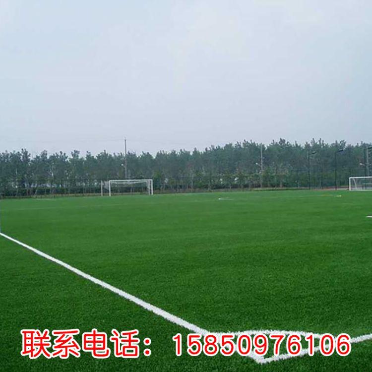 台湾青草坪 种子 耐践踏 耐修剪 草坪种子 四季常青苗圃台湾青