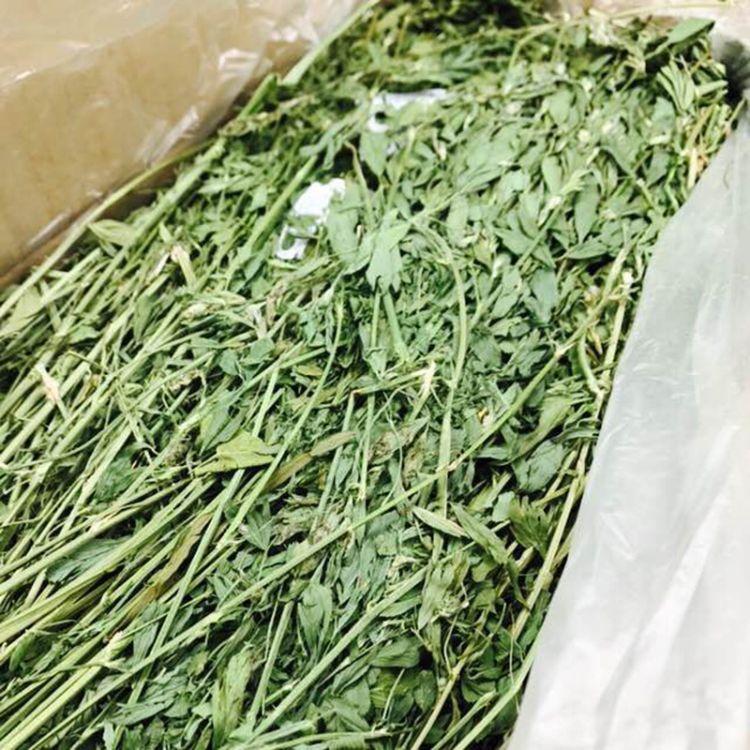 苜蓿草 新款自然烘干紫花苜蓿草饲料 1000g龙猫兔子宠物干草粮食