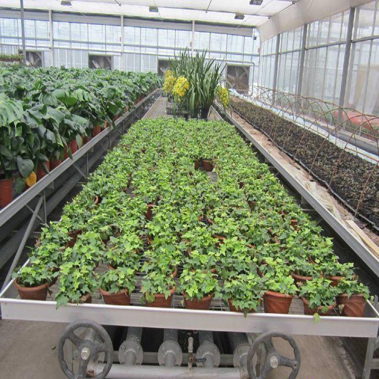成都批发 温室热镀锌移动苗床蔬菜花圃育苗固定苗床网 可定制