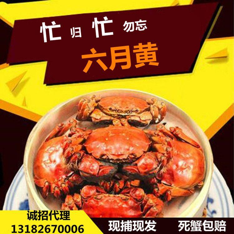 六月黄十只装香辣蟹面拖蟹小蟹送制作方法酱料单只重1.7-2.0两
