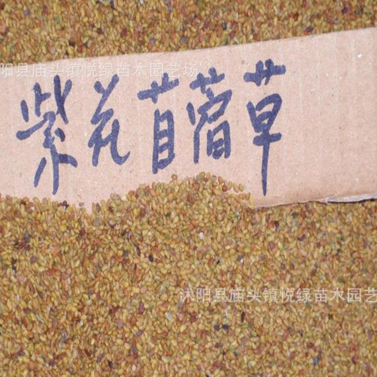 批发牧草种子 黑麦草 紫花苜蓿  皇竹草 象草 狼尾草