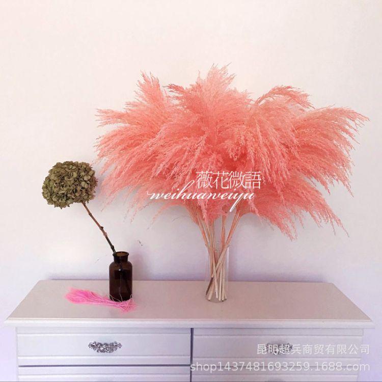 【肉粉芦苇】芦苇干花粉色蒲苇拍摄道具商场婚庆布置干草装饰
