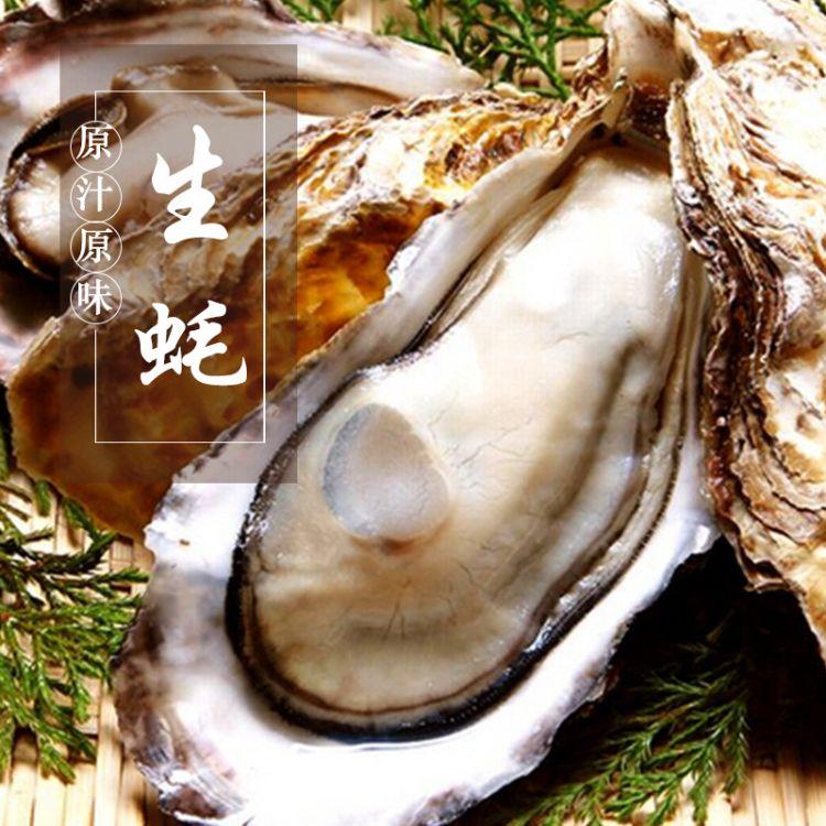 产地直销   澳珍蚝生活现货供应鲜活水产品生蚝肉质爽口