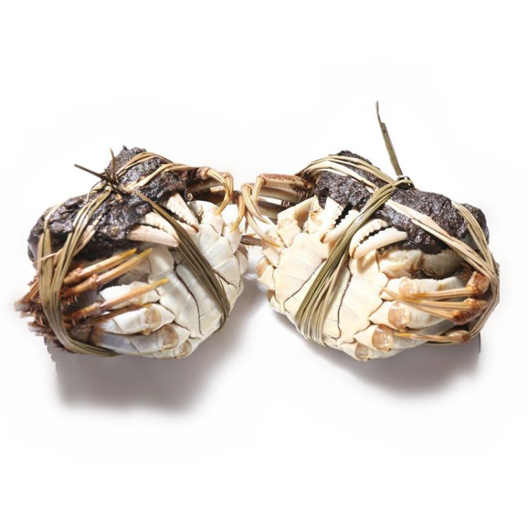 正宗现货旺锦年红膏大闸蟹鲜活螃蟹死蟹包赔 顺丰包邮 蟹农直发