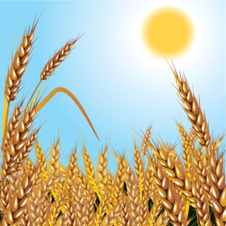 厂家直供 食品级 麦芽糊精 水溶性糊精 各种DE值 凯瑞玛