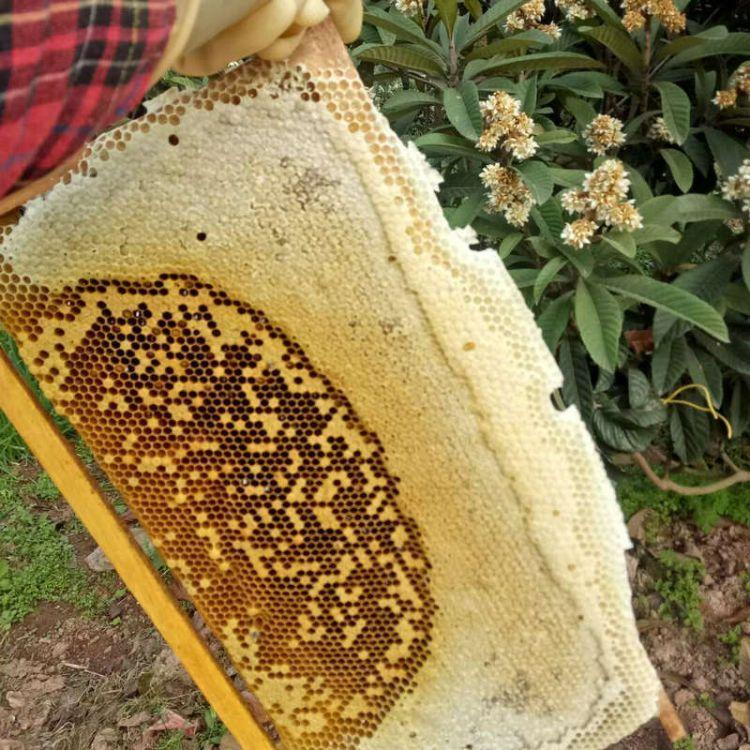 黄龙溪蜂场批发中华土蜂蜜成熟蜂蜜 枇杷蜂蜜 农家土蜂蜜
