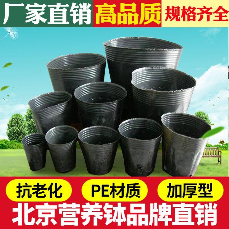 加厚黑色塑料营养钵营养杯 软塑料芽苗菜穴盘育苗盆育苗盘