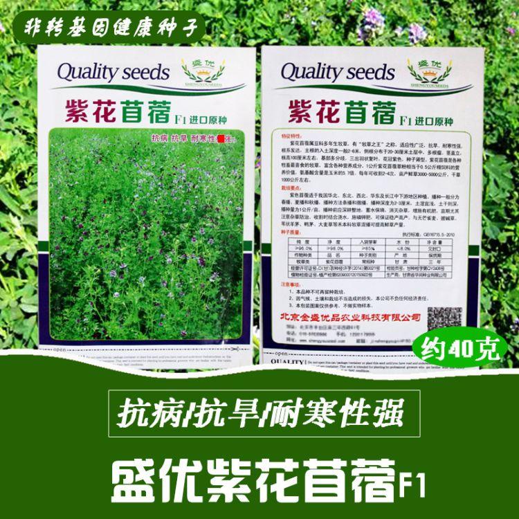 紫花苜蓿种子批发 草籽 牧草 紫花苜蓿草种 散装种子 蔬菜种子