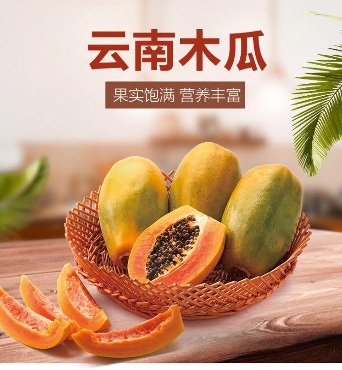 果园采摘直供云南红心木瓜新鲜水果红心木瓜一件代发包邮
