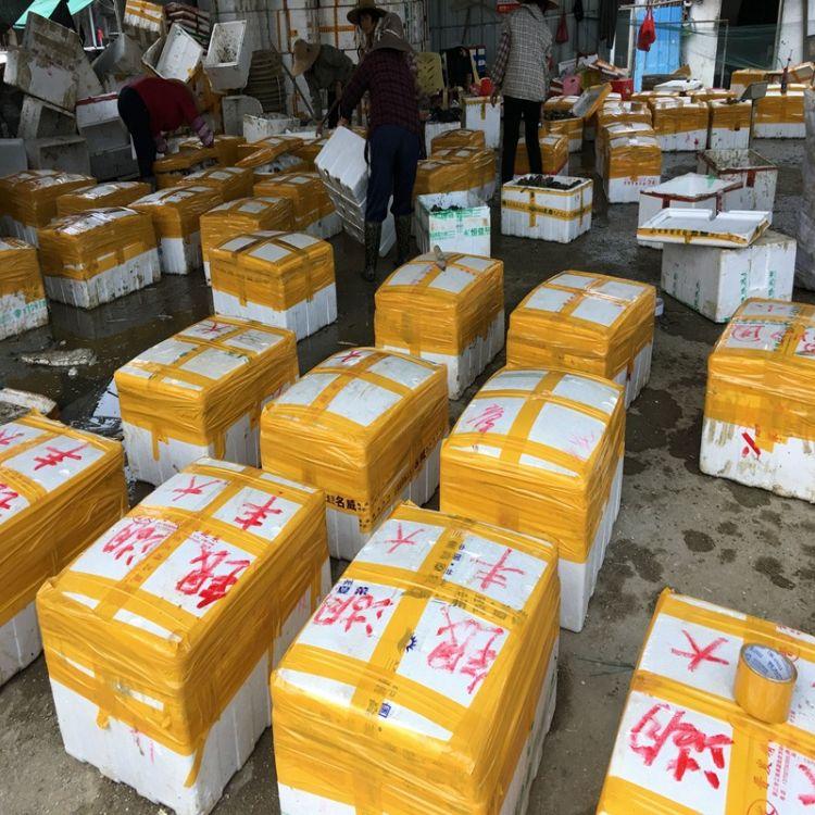 湛江蚝场生蚝直供批发鲜活水产品海鲜贝壳牡蛎烧烤现捞现发