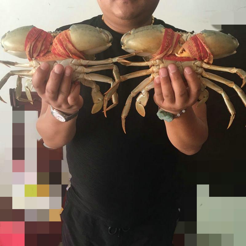 鲜活青蟹批发三门青蟹东海大螃蟹海鲜特产红膏海蟹活体大青蟹批发