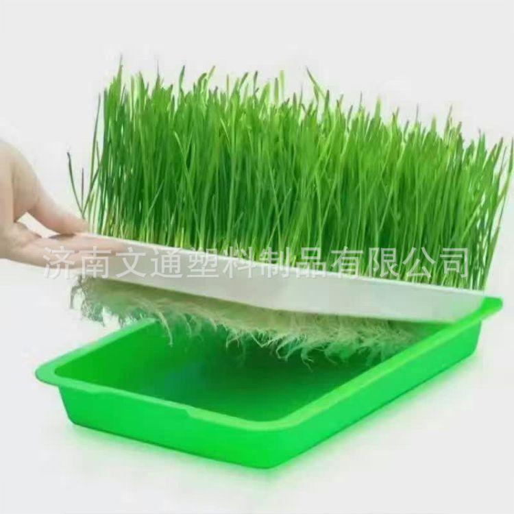 方形芽苗盘 水培芽苗盘 双层种植芽苗盘 种植专用