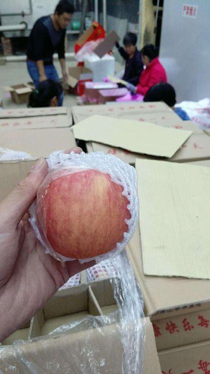 山西苹果 产地直销 膜袋苹果 红富士苹果 运城苹果 量大从优