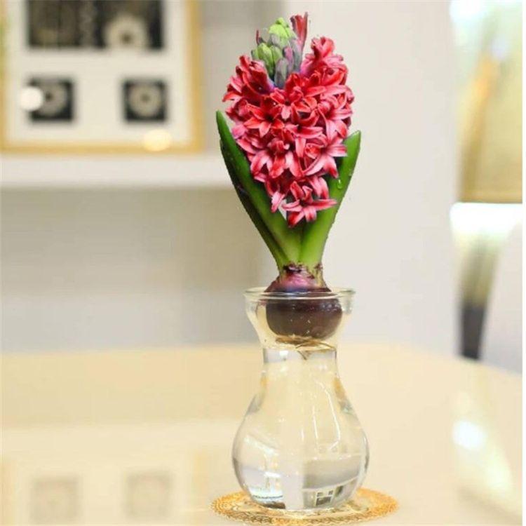 厂家批发风信子花瓶 水培玻璃花瓶 插花玻璃瓶 创意水中花玻璃瓶