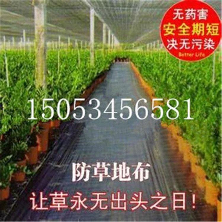 园艺地布生产厂家,主要生产,果园除草布,花木苗圃除草布,蔬菜