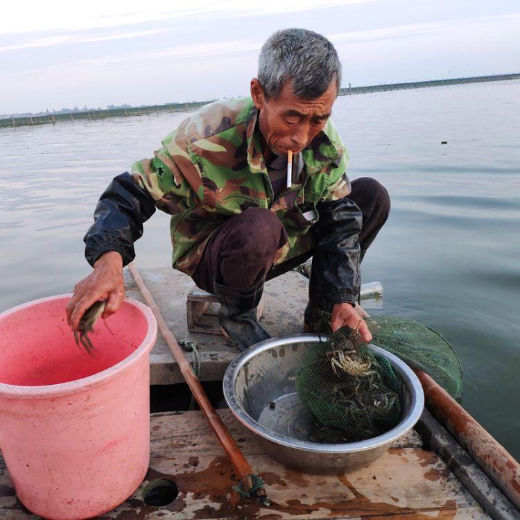 企业团购 旺锦年大闸蟹新鲜鲜活礼盒送礼螃蟹 4对5两公3.5两母