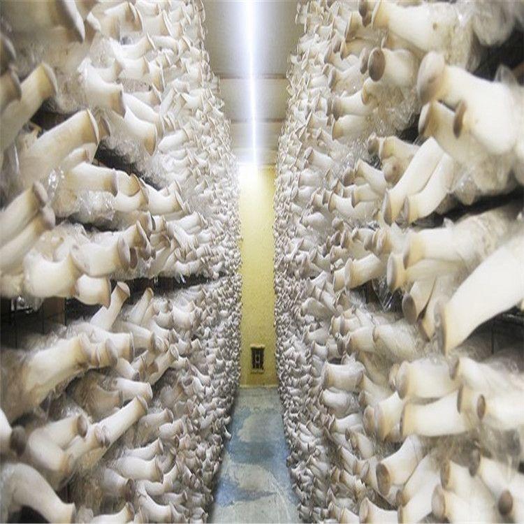 厂家批发长短绒棉籽壳 栽培种植菇类 一吨也是批发价