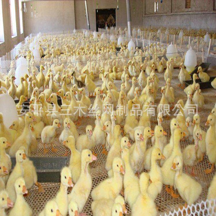 全新白色塑料养殖网 育雏网 加厚脚垫网 塑料平网厂家