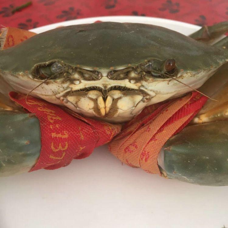 精品大青蟹送礼海鲜水产鲜活海蟹三门青蟹大红膏蟹满膏东海大螃蟹