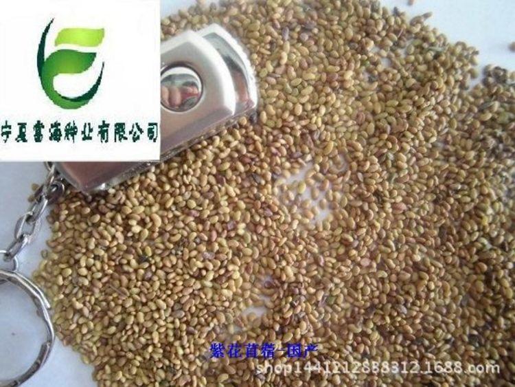 牧草之王-优质牧草种子豆科苜蓿种子――国标一级紫花苜蓿