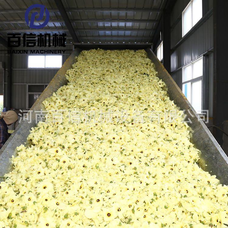 鲜花烘干机 连续式鲜花干燥设备 大型鲜花草茶烘干机