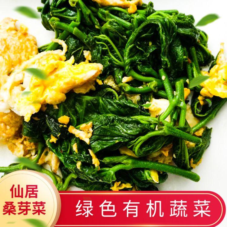 绿色有机食材芽菜 酒店食用桑芽有机蔬菜 农场桑叶菜批发
