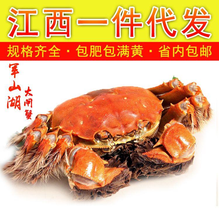 南昌军山湖大闸蟹6只2-2.4全母一件代发现货螃蟹鲜活省内顺丰包邮