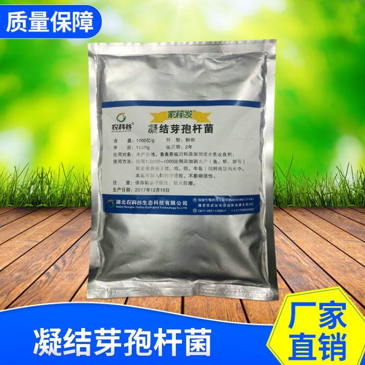 大量供应凝结芽孢杆菌微生物饲料添加剂动物营养性添加剂价格优惠