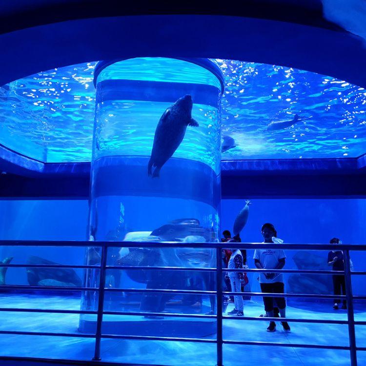 大型海底隧道亚克力圆柱鱼缸工程设计制作 海洋馆设计制作