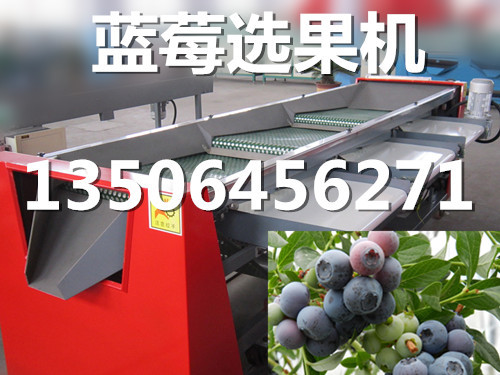 凯祥蓝莓选果机厂,2018新款蓝莓选果机,蓝莓选果机凯祥专业造