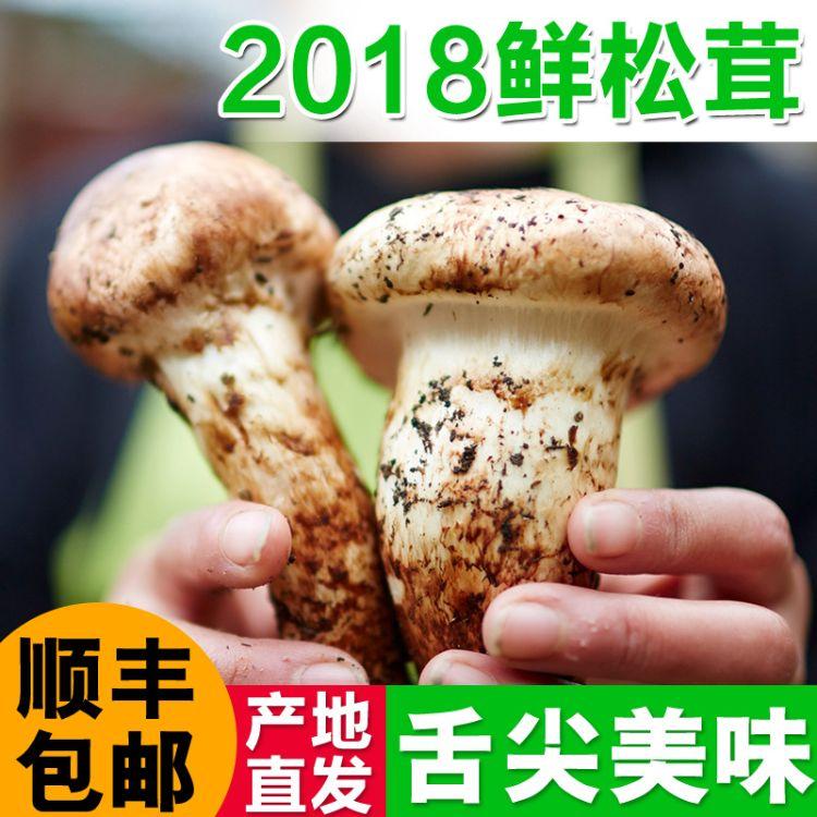 广昆堂 野生松茸 香格里拉特产野生松茸 原产地直发新鲜松茸 代发