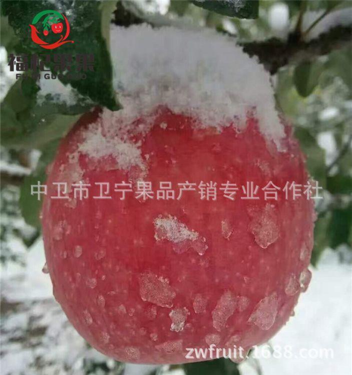 水果 宁夏红富士苹果产地直供 苹果水果批发农家特产鲜果包邮爆款
