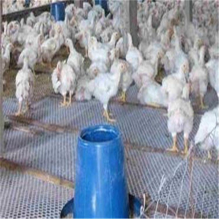 批发鸡鸭垫底网白色养殖网养鸡塑料平网家禽围栏网聚乙烯塑料网
