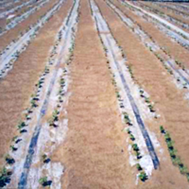 低价供应滴灌带系列 迷宫式滴灌带 迷宫式滴灌带 现货销售