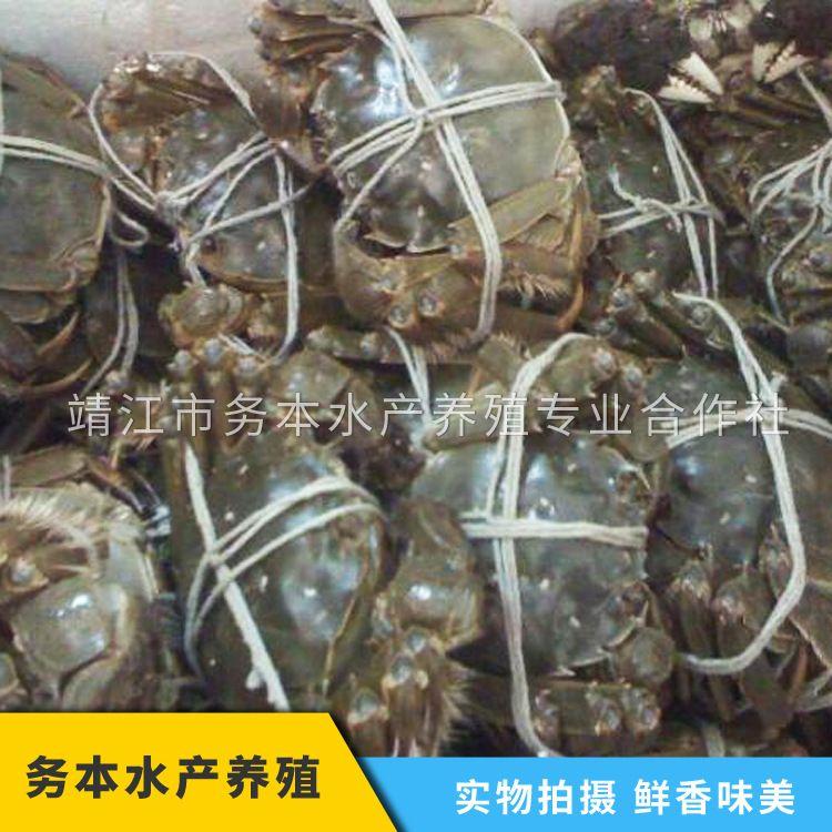 江尚味大闸蟹 4.5两全公蟹 养殖批发 长江大闸蟹 鲜活螃蟹