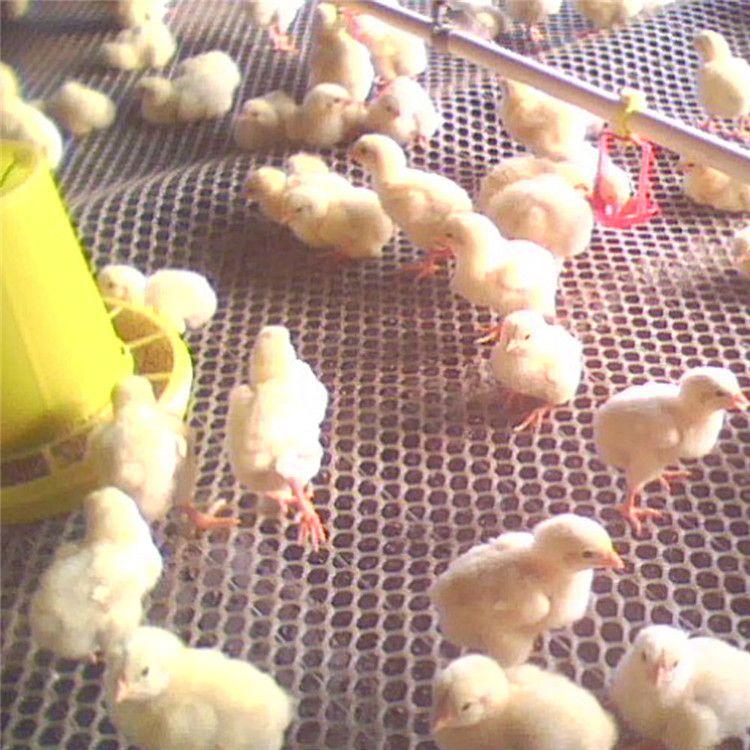 养鸡养鸭养鹅漏粪育雏网脚踩网 塑料平网床垫网 水产养殖网