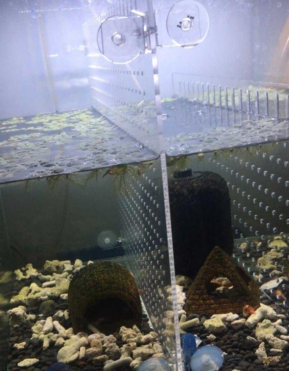 亚克力鱼缸隔断板 水族箱隔层板 鱼苗隔板 龙鱼隔网 幼鱼分离网