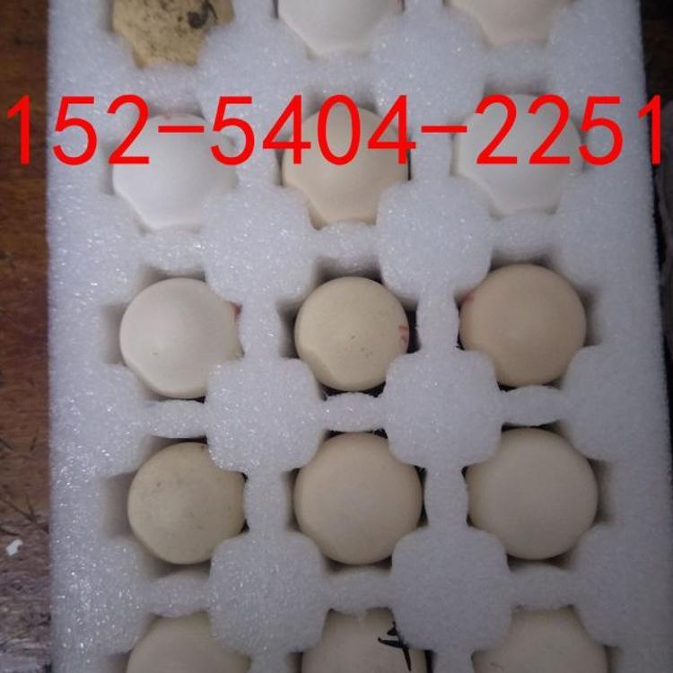 新鲜斗鸡蛋零售批发出售 越南纯种斗鸡种蛋受精鬼子斗鸡蛋价格